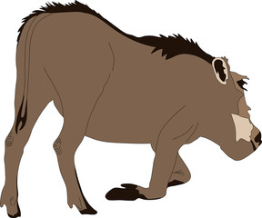 hand drawn portrait of a wild  warthog - colored vector Illustration isolated on white background