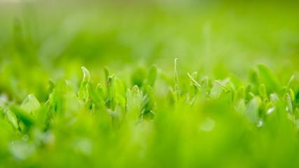 natural background green grass focus