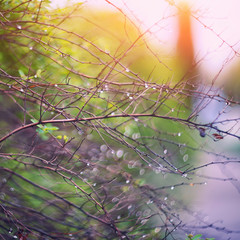 twinkling lights vivid color blurred bokeh spring from leaf background