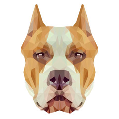 American Staffordshire Terrier dog animal low poly design. Triangle vector illustration.
