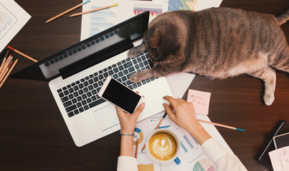 Working concept - girl with her assintant cat at the office