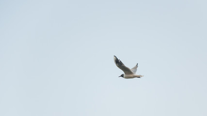 The flight of seagulls