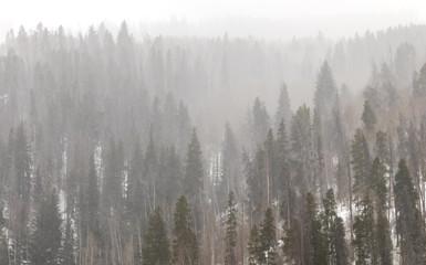 Colorado Winter Forest Landscape in Colorado Mountains