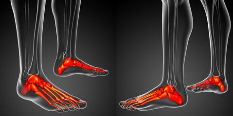 3d rendering illustration of the foot bone anatomy