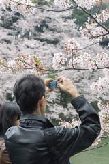 花見 写真撮影