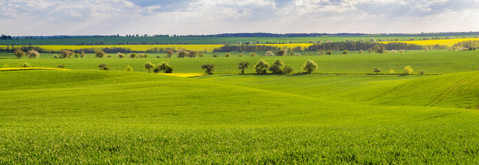 Panorama of a spring field in Germany, agricultural land in Brandenburg