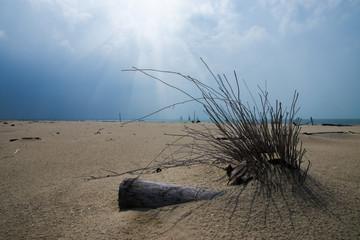 Stumps on empty beaches.