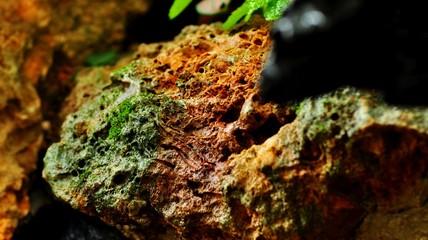 Photo sur Aluminium Rivière de la forêt Moss rock