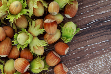 the handful of hazelnuts