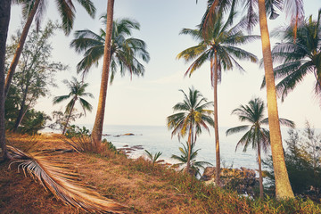 Beautiful tropical beach with big coconut palms.