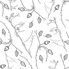 Seamless floral pattern, Barberry hand drawn branch vector sketch isolated on white background, line art berry, Natural spicy herbs, graphic doodle cooking ingredient for design package tea, cosmetic