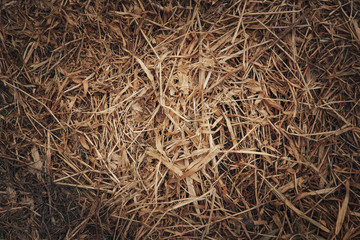 .Texture of dry grass
