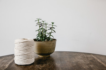 Yarn and plant on a wooden table