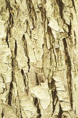 wood bark as background/wood bark as background