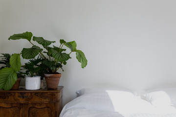 Bedroom with white sheets and plants