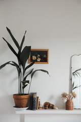 Interior with antique mirror and plants