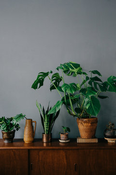 Vignette with plants on wooden shelf