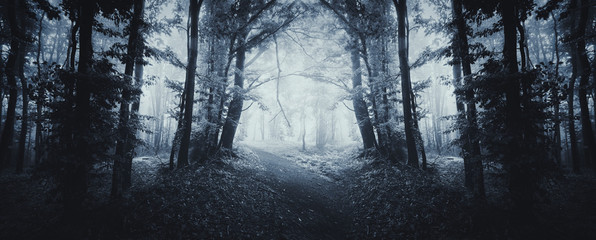 fantasy forest road