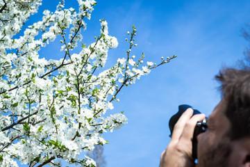 Mann fotografiert Baumblüte
