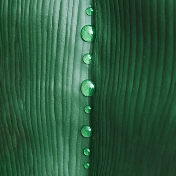 Water drops on green tropical leaf
