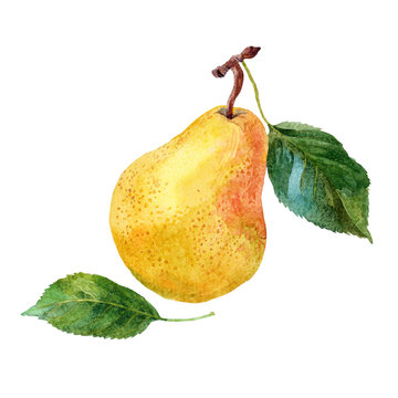 Pear. Watercolor.