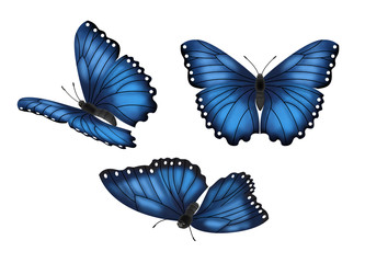 Blue Butterflies Set
