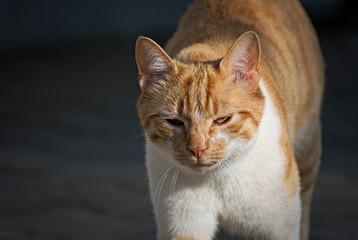 Portrait of a cute cat outdoor