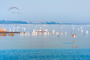 Bird paradise, Akyatan Lagoon,