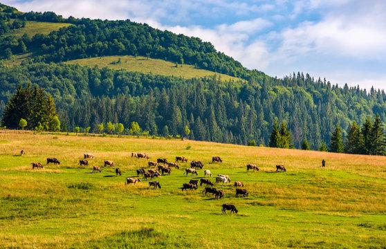 few cows grazing on hillside meadow