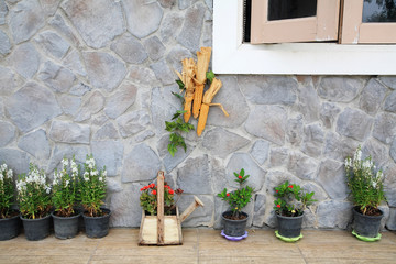 fancy plants decorated on house wall
