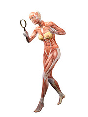 Muscle Woman Anatomy searching 3D Illustration