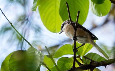 little bird on tree branch