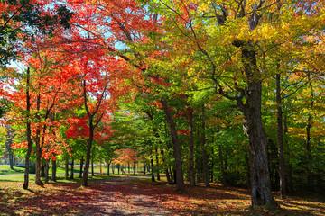 Brilliant fall foliage in rural Nova Scotia, Canada.