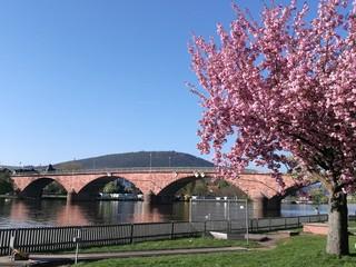 Mainbrücke in Miltenberg im Frühling