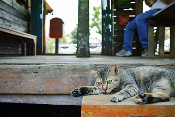 cat sleeping on wood stair at cafe.