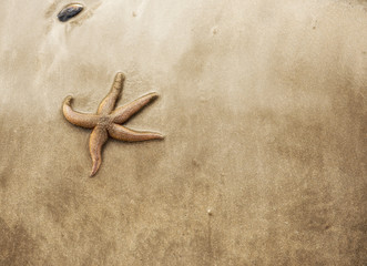 Background image of a starfish on golden sand