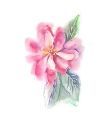 Pink Flower. Watercolor