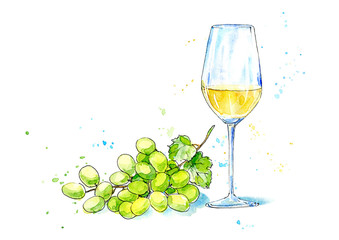 Glass of a white wine and  grapes.Picture of a alcoholic drink.Watercolor hand drawn illustration.