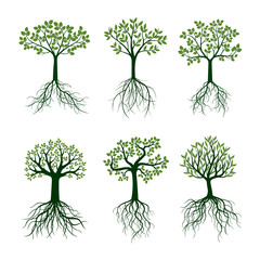 Green Trees with Leafs and Roots. Vector Illustration.