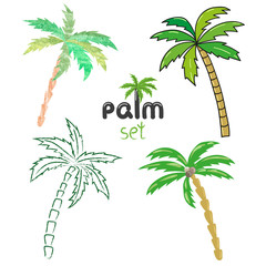Palm trees set. Vector illustrations isolated on white background.