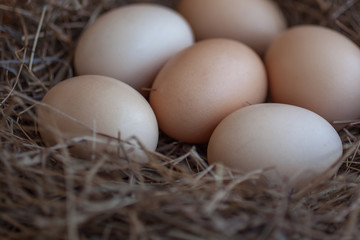 Close up of chicken eggs laying in bird nest