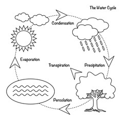 The Water Cycle / Vector schematic representation of the water cycle in nature. Illustration of diagram water cycle. Cycle water in nature environment.
