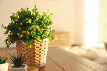 Beautiful houseplant in wicker pot on blurred background