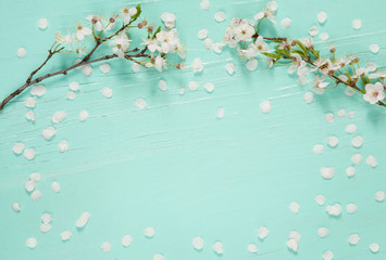 Amazing background With white cherry blossoms