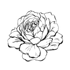 Hand made vector abstract graphic ink peony or rose flower isolated on white background.Outline design elements for boho wedding,birthday,save the date card