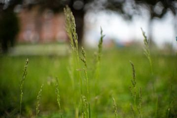 Green Grass Field with Blurred Background