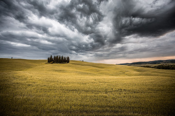 Scenic view of cypress trees in yellow meadow field against cloudy sky