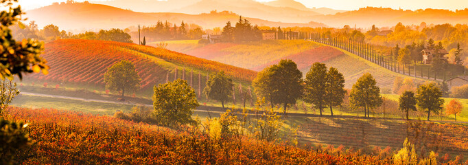 Scenic view of vineyard during autumn