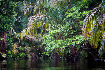 Costa Rica, Tortuguero National Park.