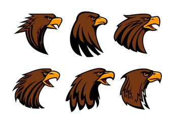 Sport team eagle or hawk bird head vecor mascot